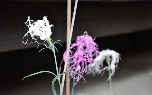京都旧百々御所宝鏡寺-人形寺-